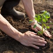 土用の日,庭いじり,NG,やってはいけないこと